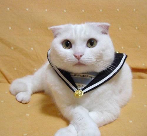 Коты и кошки котята прикольные фото